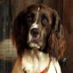 English Springer Spaniel Video